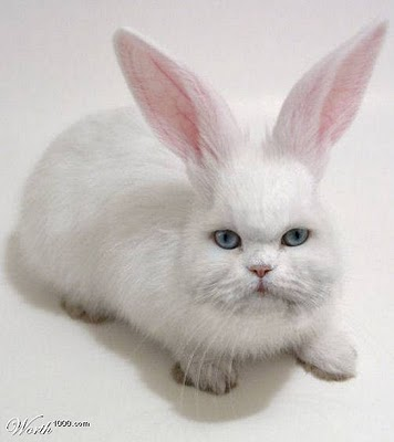Minnie, the strange rabbit-cat