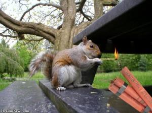 Squirrel Terrorists