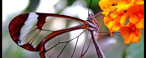 10 Most Amazing Butterflies in the World